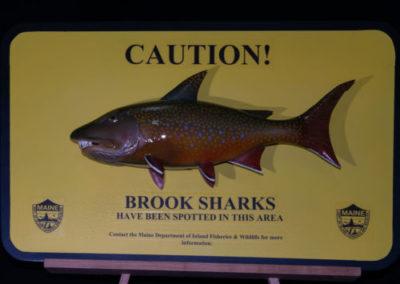 Brook Shark
